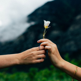 Two hands sharing a beautiful flower. Background of foggy mountains